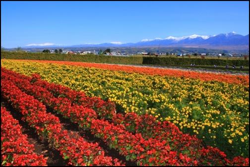 北海道の花壇の画像