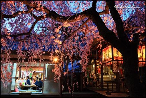 水火天満宮の桜ライトアップ画像