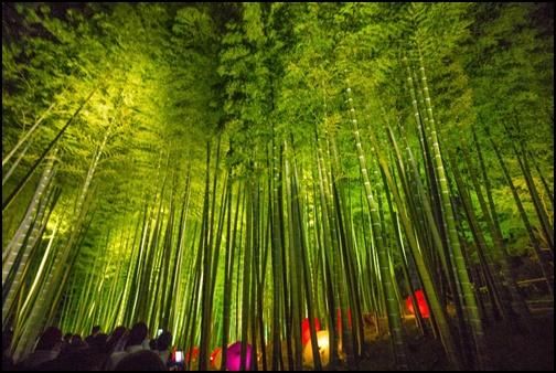 高台寺の竹林画像