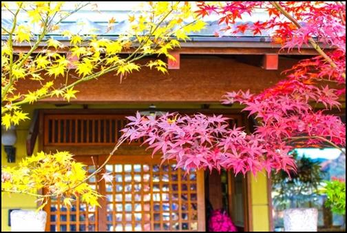 京都の紅葉画像