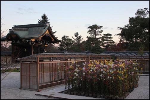 大覚寺の画像
