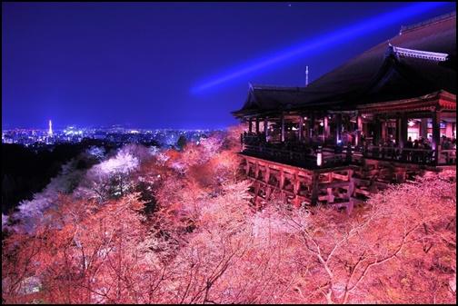 清水寺の桜のライトアップの画像