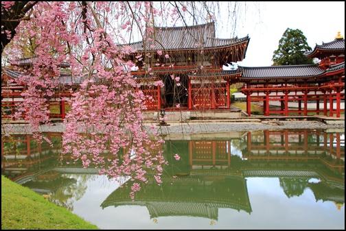 鳳凰堂のしだれ桜と水鏡の画像