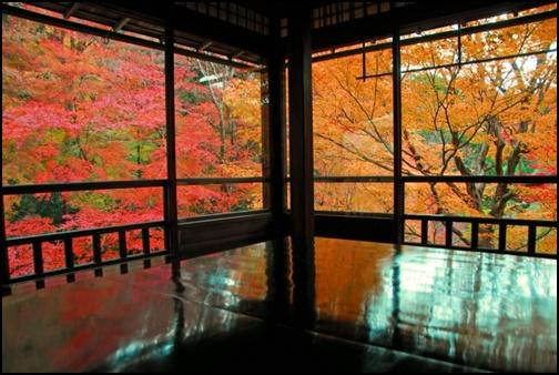 瑠璃光院の床モミジの画像