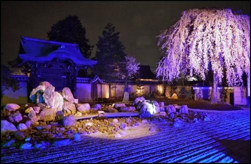 高台寺の桜画像