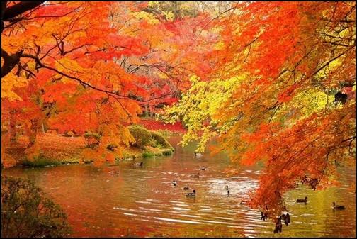 京都府立植物園の紅葉の画像