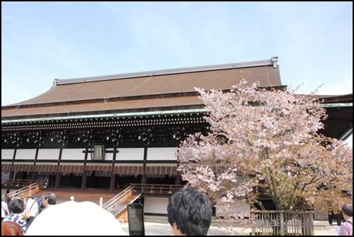 京都御所・紫宸殿 左近の桜の画像