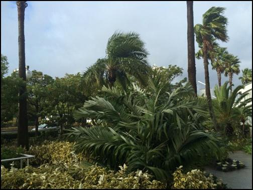 暴風の画像