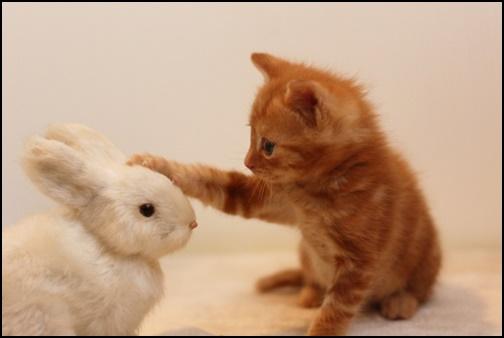 猫とウサギの画像