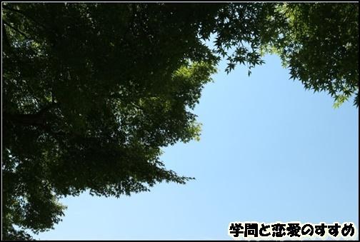 対角線を意識して撮影された森林の画像