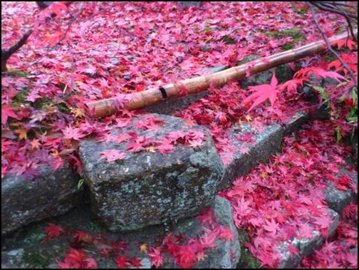 岩断紅葉の画像