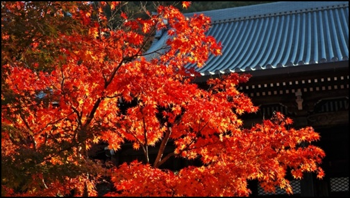 永観堂の紅葉の画像