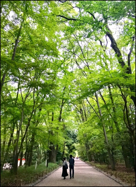 下鴨神社の糺の森の画像