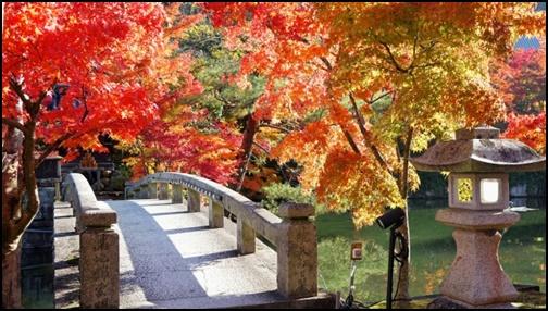 永観堂の紅葉画像