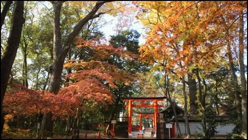 下鴨神社の紅葉画像