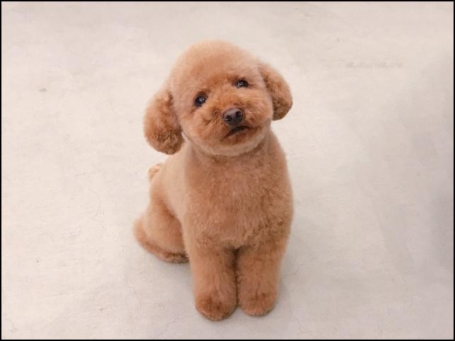 茶色い毛の子犬が首をかしげてこちらを見ている画像