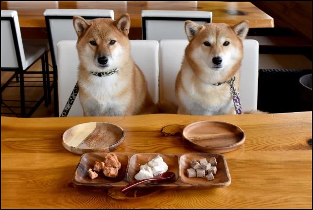 犬がご飯の前で待っている画像