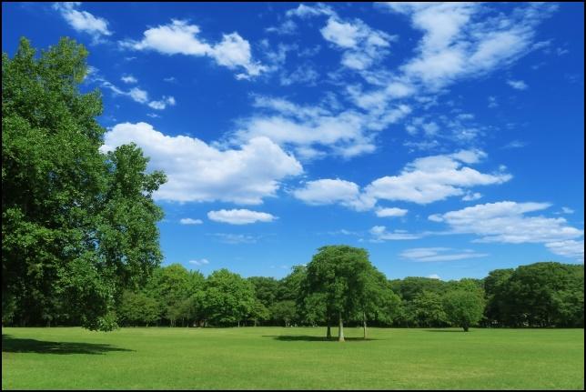 公園の綺麗な芝生の画像